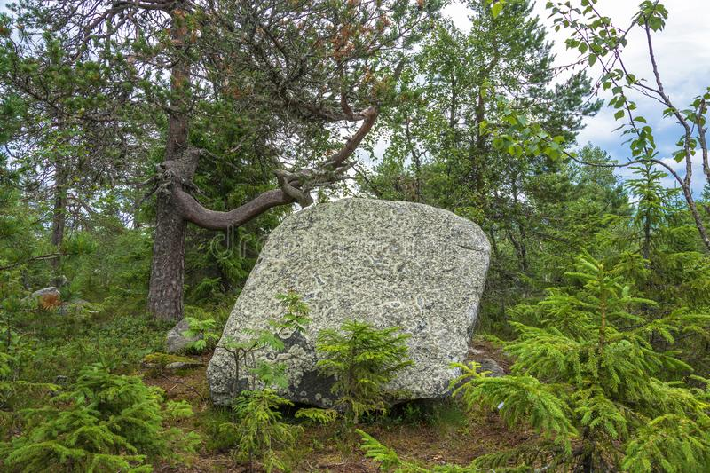 Large rocks boulders in the nature reserve of mount Vottovaara,. Large stones boulders in the nature reserve of mount Vottovaara, Karelia, Russia royalty free stock photos
