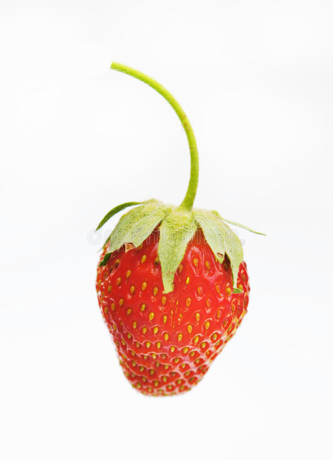 Download Large Strawberries On A White Background Stock Photo - Image: 23555064
