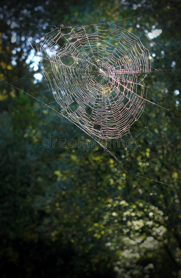 Large Stretched Spiderweb stock photos