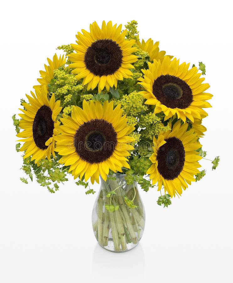 Large Sunflowers in a Vase on White Space royalty free stock image