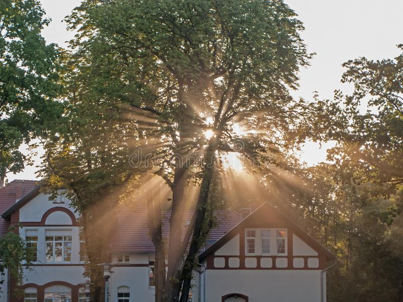 Rays of rising sun among trees. Large, tall deciduous trees. It`s morning. A light fog is drifting in the crowns. The rays of the rising sun pierce through the royalty free stock photo
