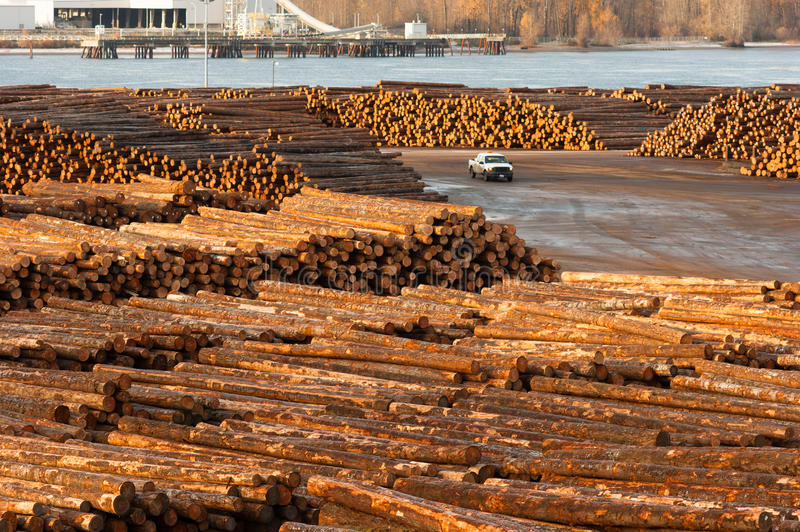 Large Timber Wood Log Lumber Processing Plant Riverside Columbia royalty free stock image