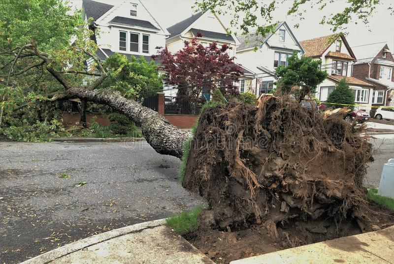 Large Tree Damage Natural Disaster Rain Storm Destruction Tree Removal royalty free stock photography
