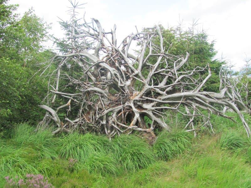 Large tree root stock photo