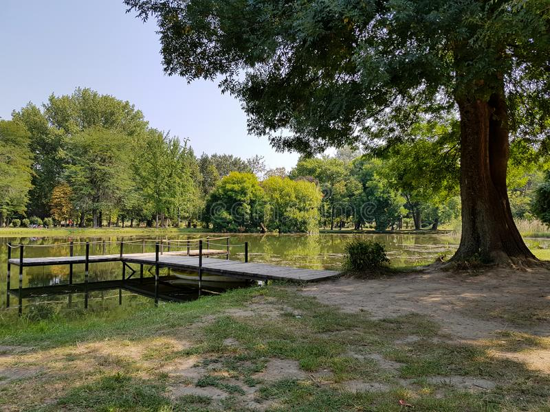 Large tree by the side of a lake on a clear summer morning. stock image