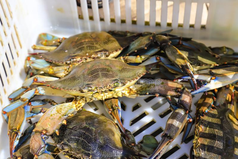 Large tropical crabs lie in a box, fishing stock image