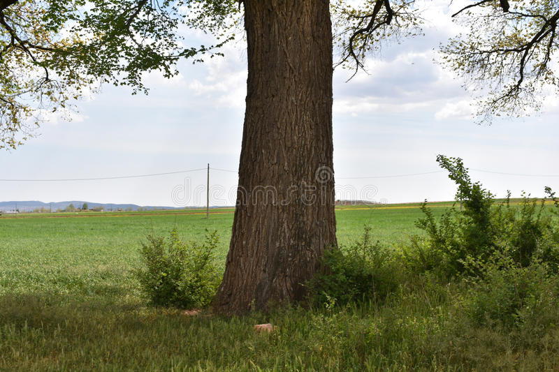 Large trunk royalty free stock photos