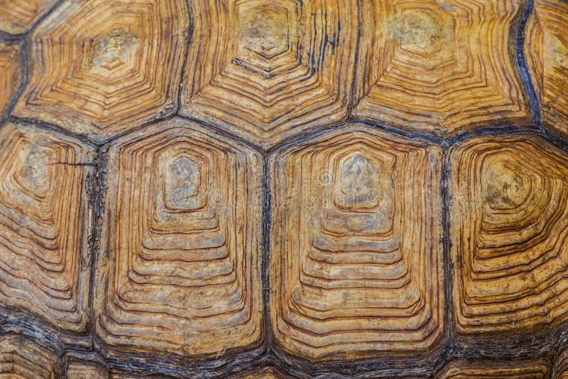 Large turtle shell texture beautiful. Background horizontal stock photography