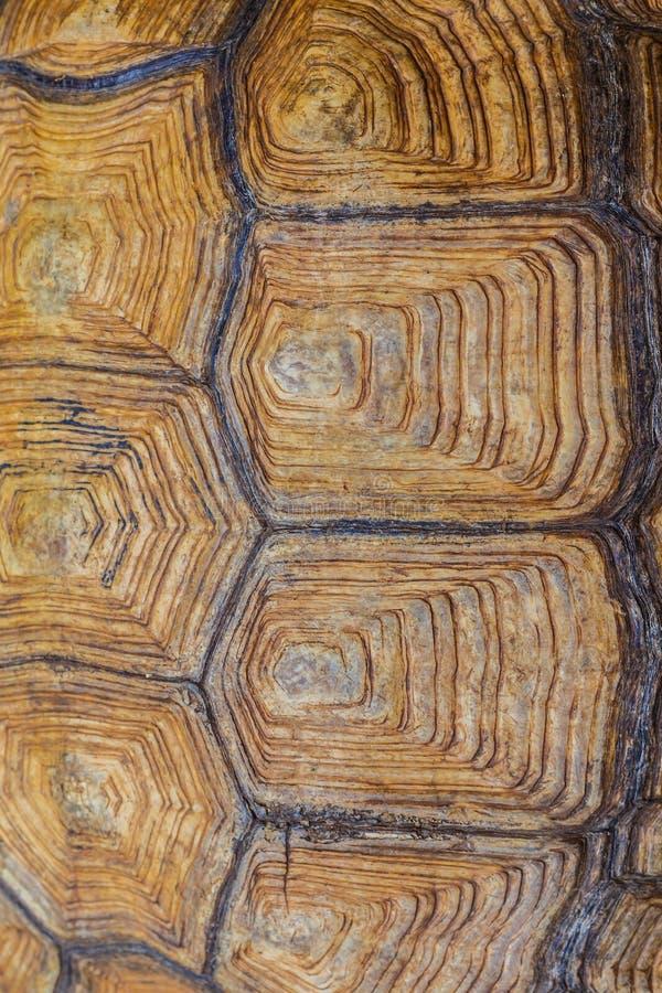 Large turtle shell texture beautiful. Background horizontal royalty free stock photography