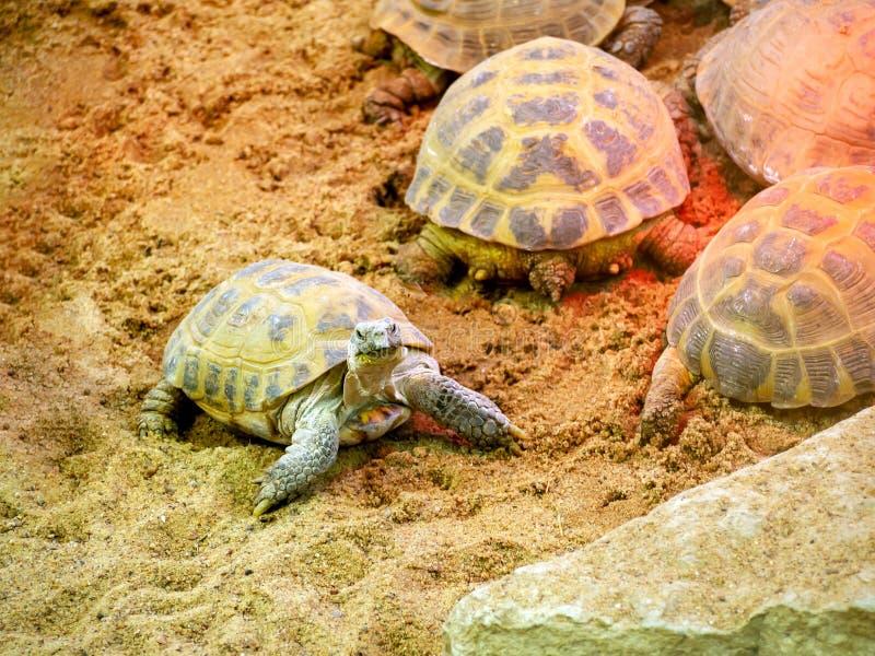 Turtle on zoo royalty free stock photos