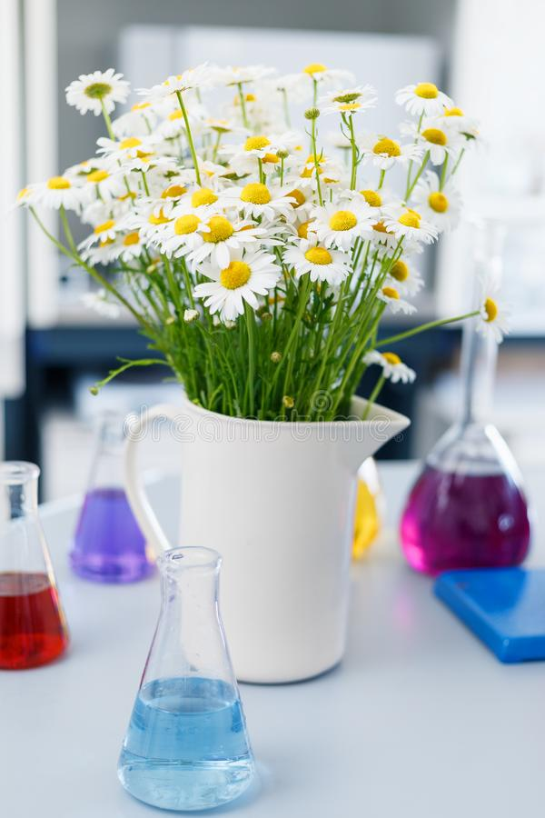 A large vase with daisies in the chemical laboratory, flasks with colored liquids standing on the table royalty free stock photography