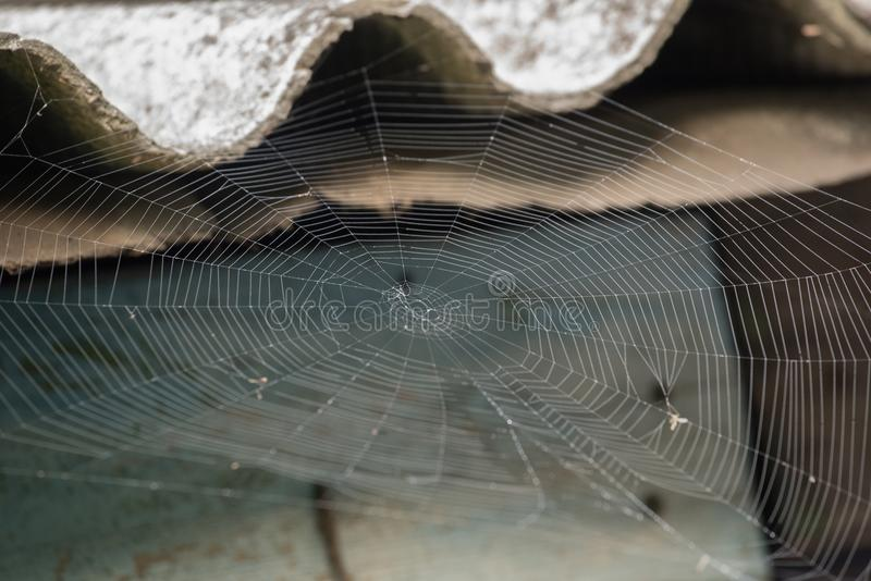 Large white spider web in dew in the morning on a summer background. Large white spider web without spider in dew in the morning on a summer background stock images