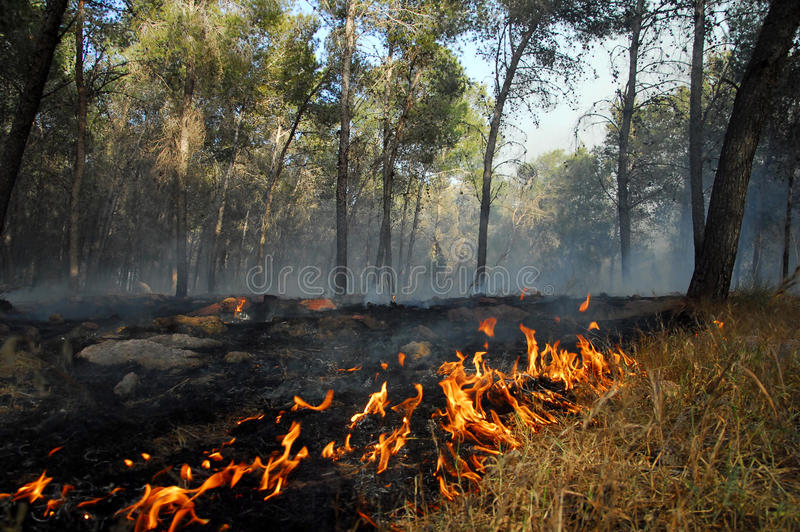 Large wildfire royalty free stock images