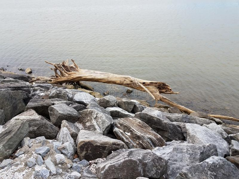 Large wood branch or tree on rocks with river stock image