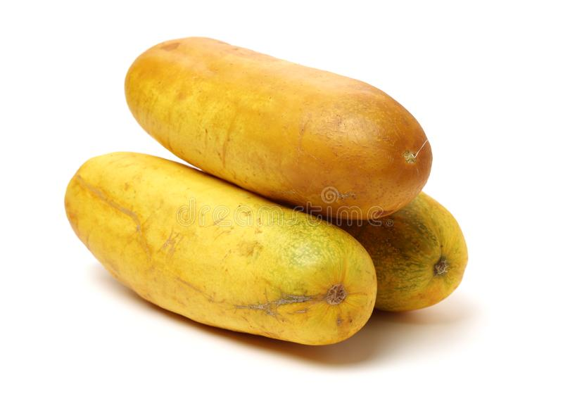 Large yellow cucumber, royalty free stock images