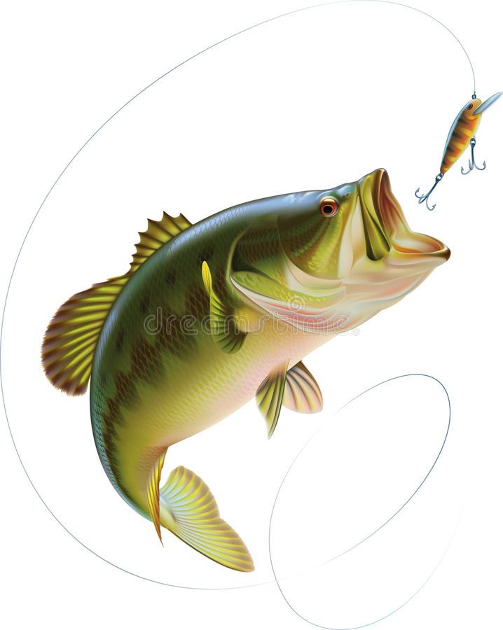 Largemouth Bass. Is catching a bite and jumping in water spray. Layered illustration