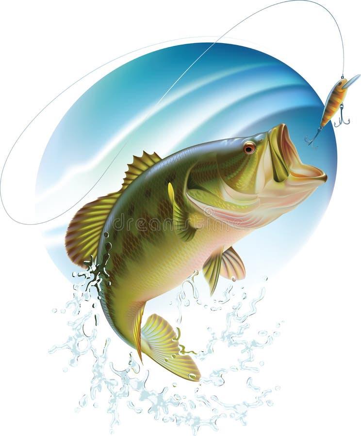 Largemouth bass catching a bite vector illustration