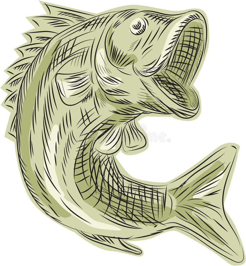 Largemouth Bass Fish Etching Stock Illustration