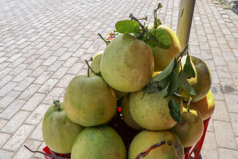 Largest citrus fruit pomelo, shaddock, or in scientific terms Citrus maxima or Citrus grandis. Bunch of fresh fruits for sale royalty free stock photo