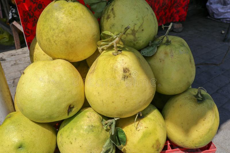 Largest citrus fruit pomelo, shaddock, or in scientific terms Citrus maxima or Citrus grandis. Bunch of fresh fruits for sale stock image