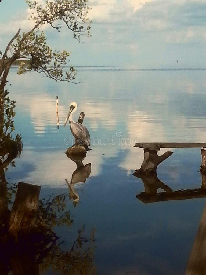 Largo Bird Sanctuary dominante imágenes de archivo libres de regalías