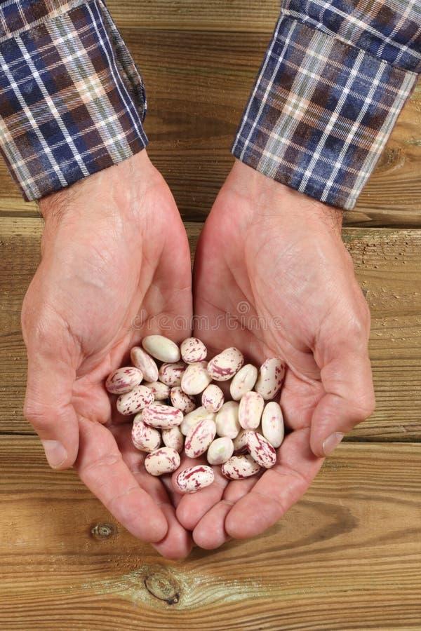 Largura caucasiano da mão do ` s do homem completamente de feijões frescos fotos de stock