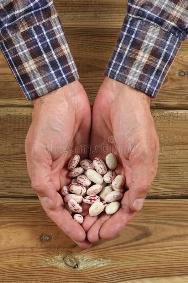 Largura caucasiano da mão do ` s do homem completamente de feijões frescos fotografia de stock royalty free