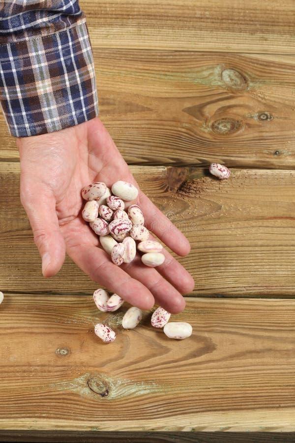 Largura caucasiano da mão do ` s do homem completamente de feijões frescos foto de stock royalty free