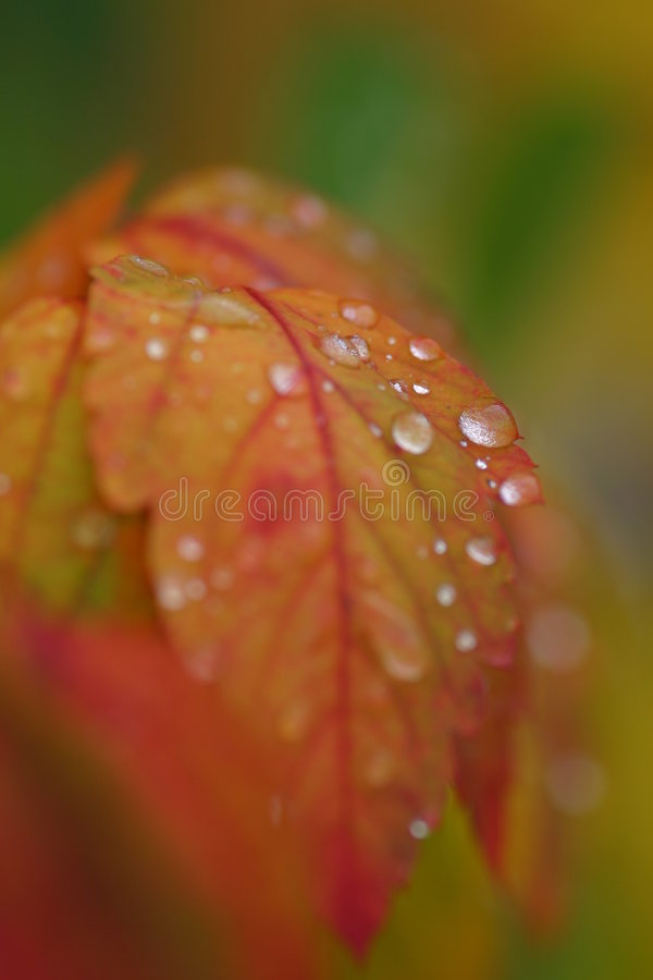 Larmes d'automne photos stock