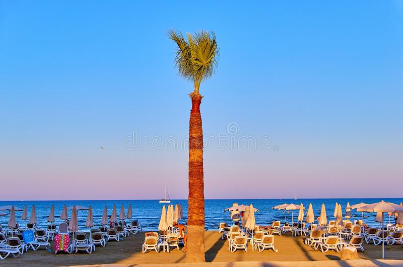 Larnaka, Chipre - 8 de agosto de 2018: Palmeiras em Chipre Larnaca sobre imagens de stock royalty free