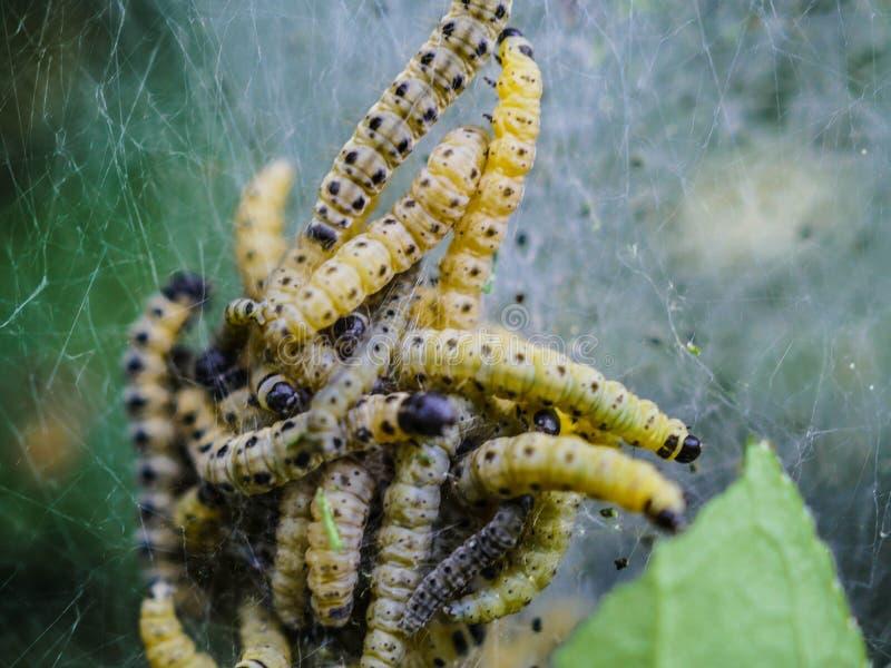 Larva, Caterpillar, Invertebrate, Insect stock images