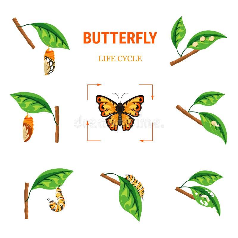 Larva da transformação do inseto do círculo da vida da borboleta na folha ilustração royalty free