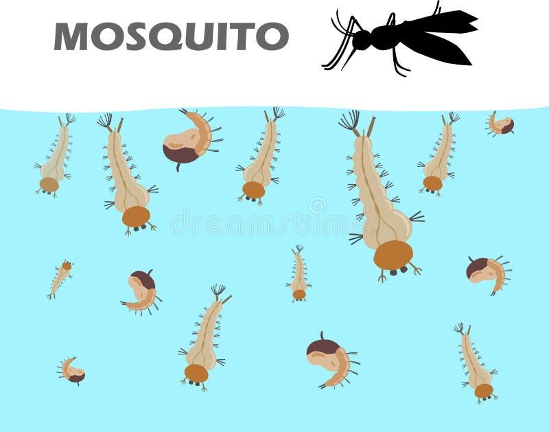 A larva do mosquito sob a água antes de tornar-se adulta é mosquitos e vem até vivo na terra Larvas do mosquito antes do adulto ilustração do vetor