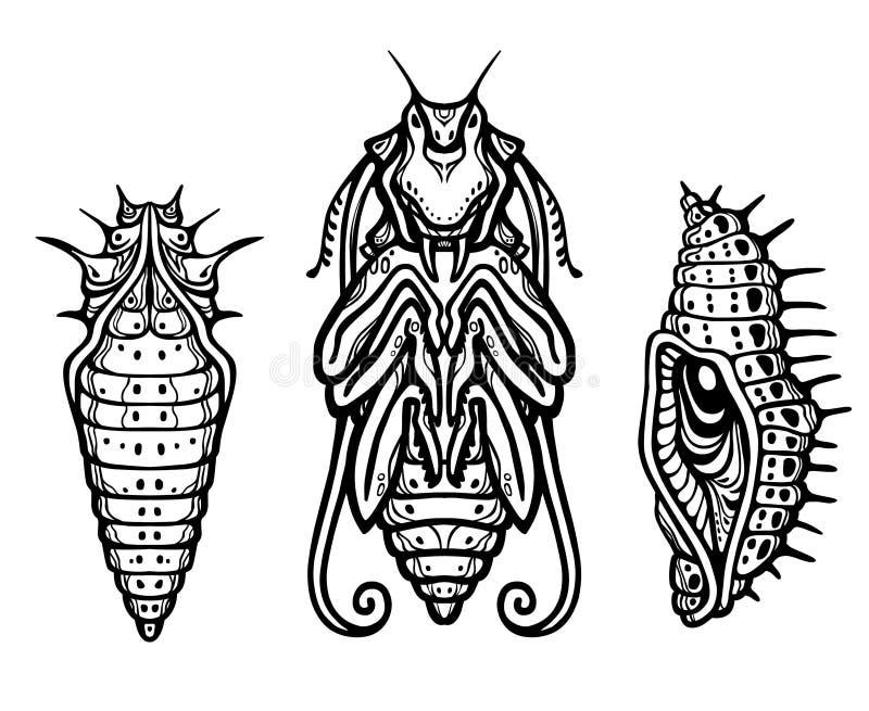 Larva fantástica de um inseto ilustração do vetor