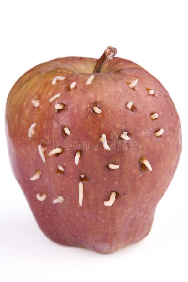 Larvas na maçã imagem de stock