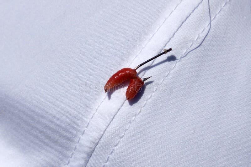 Larve de mouche de larve sur un hameçon étroit avec le fond vert trouble images stock