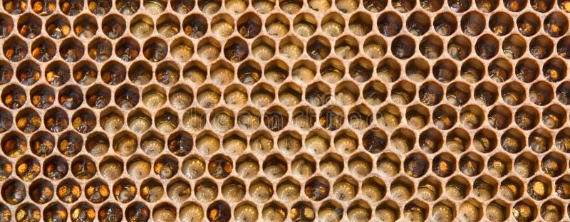 Larven de toekomst van bijen stock fotografie