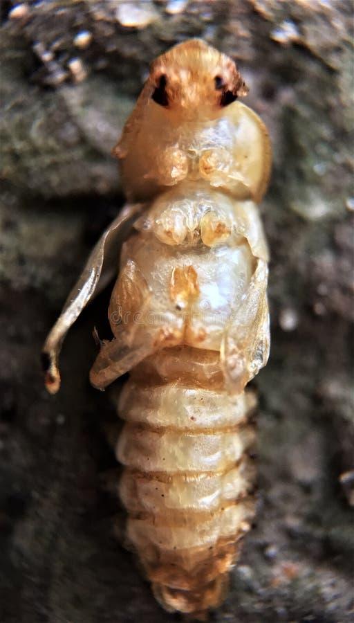 larwy fotografia stock