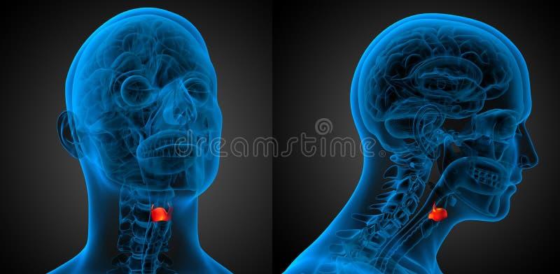 Larynx. 3d rendering medical illustration of the larynx stock illustration