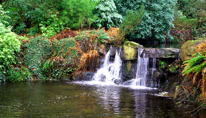 lasów tropikalnych. fotografia royalty free
