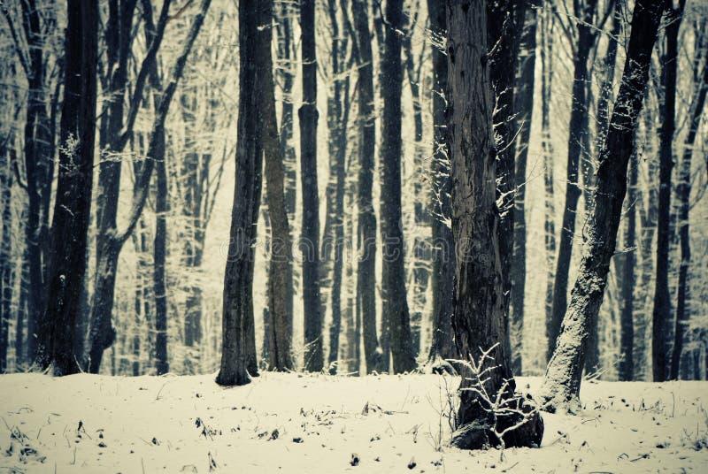 las śnieżny obraz stock
