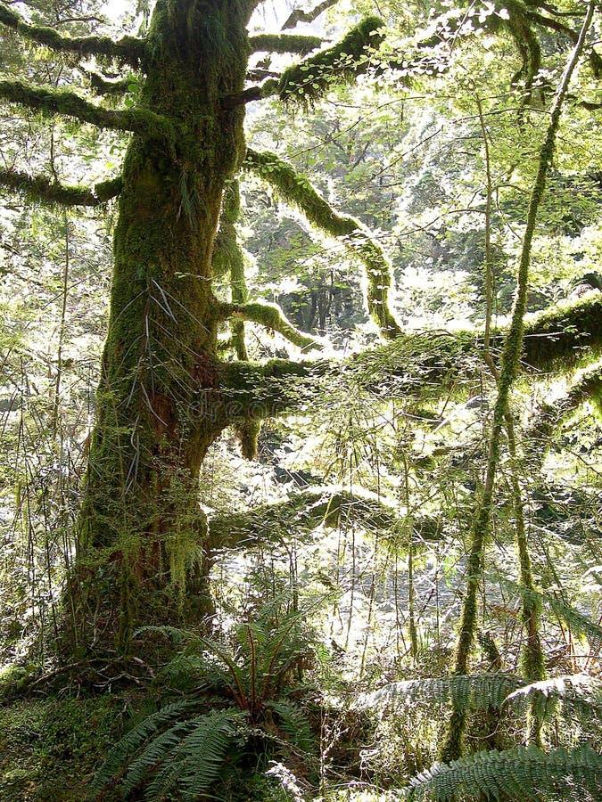 las światło obrazy stock