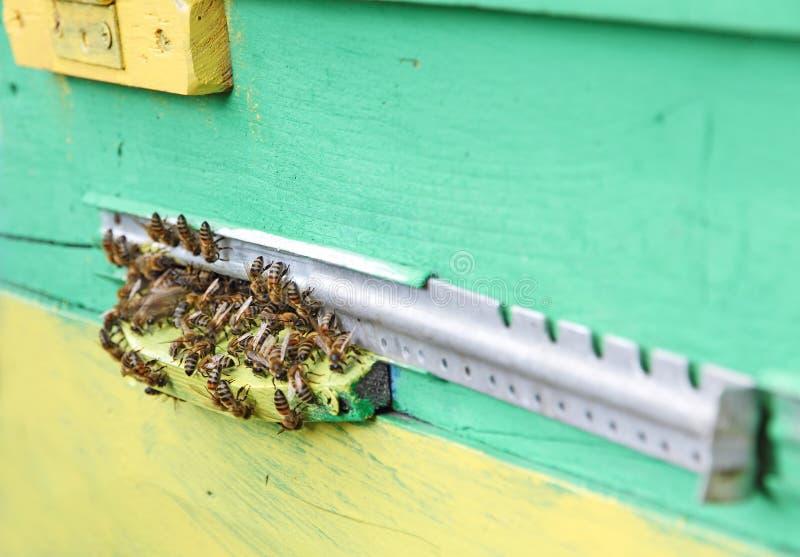 Las abejas acercan a la entrada de la colmena del color foto de archivo libre de regalías