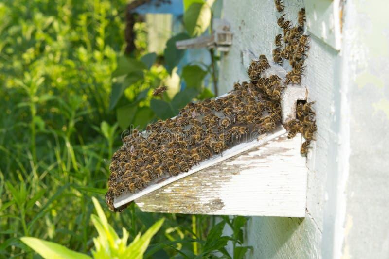 Las abejas acercan a una colmena fotografía de archivo libre de regalías