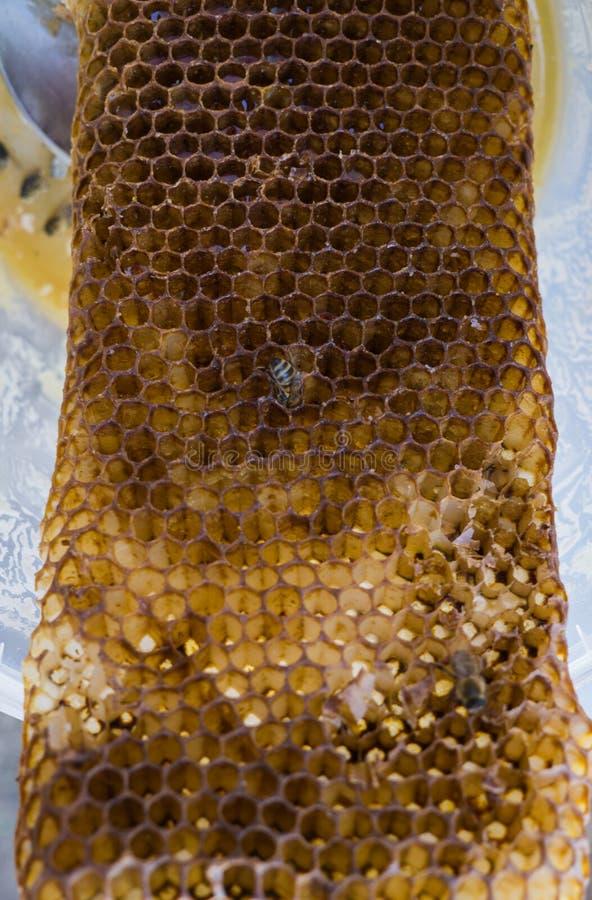 Las abejas comen la miel pasada de los panales fotografía de archivo libre de regalías