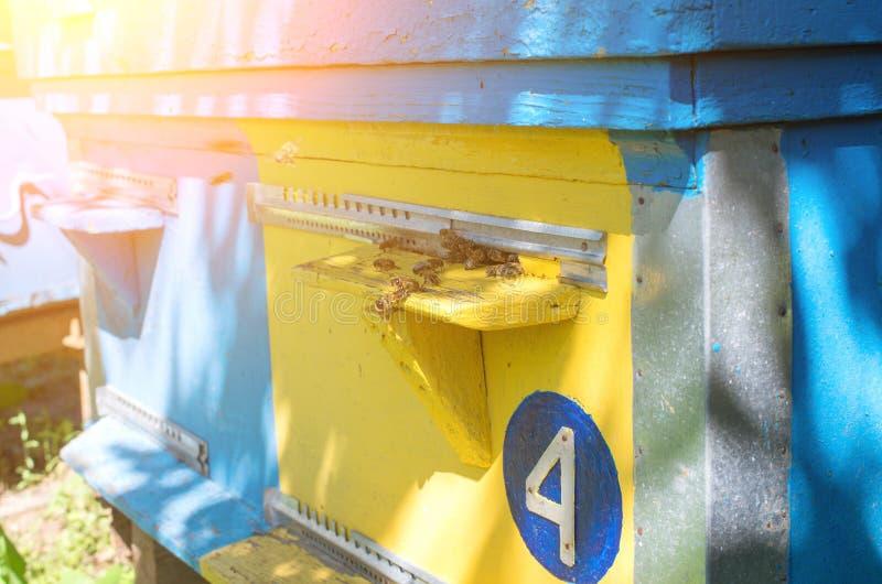 Las abejas de la miel vuelan cerca de la colmena imagenes de archivo