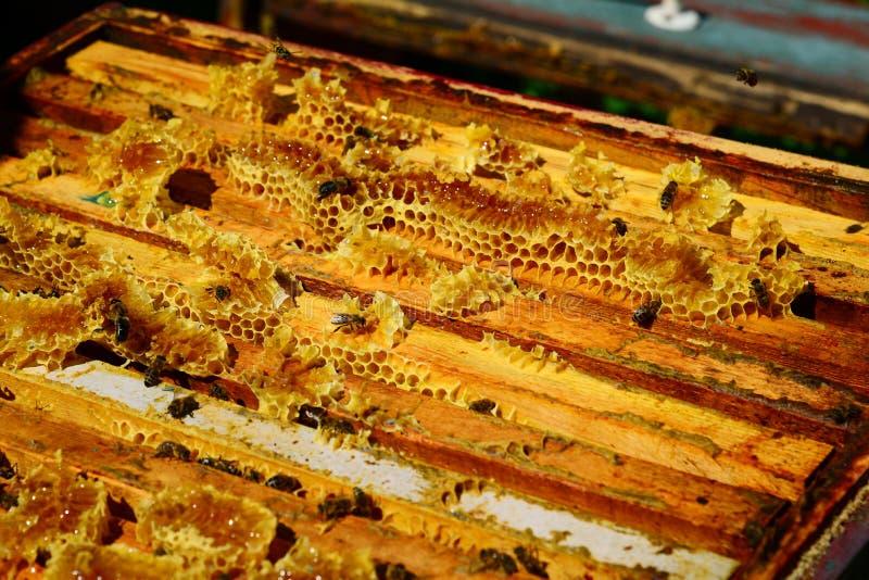 Las abejas se están sentando en el peine en la colmena foto de archivo libre de regalías