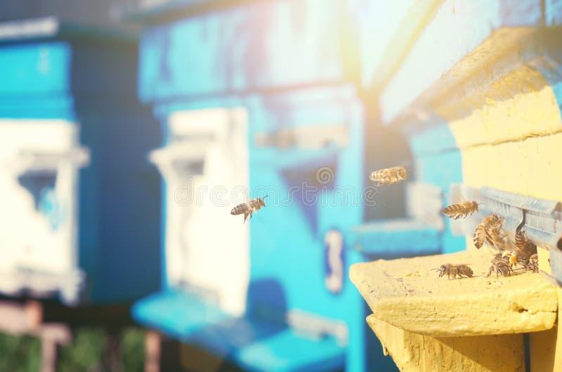 Las abejas vuelan cerca de la colmena imágenes de archivo libres de regalías