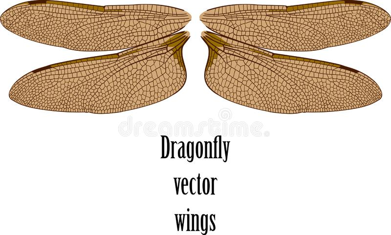 Las alas de la lib?lula ilustración del vector