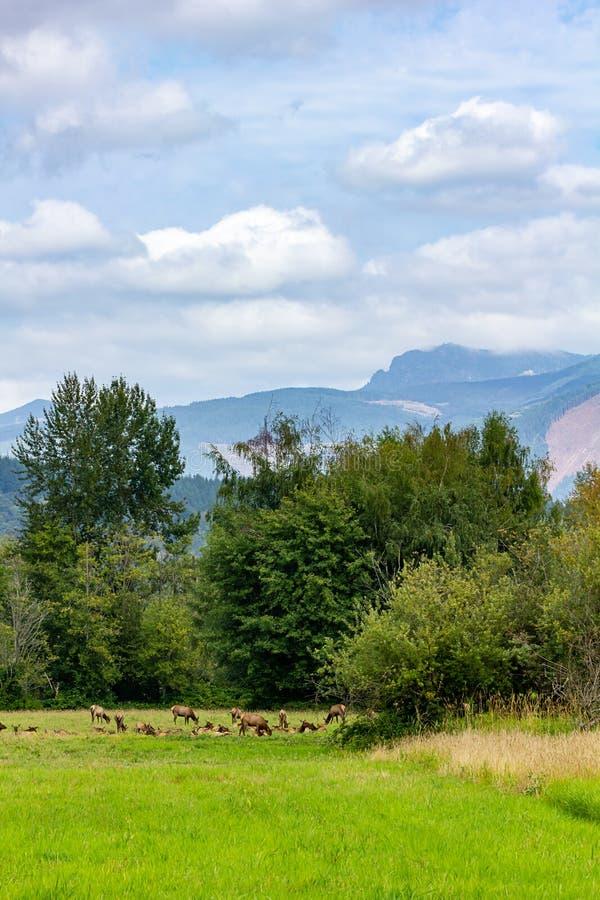 las altas montañas con los tops y las nubes ocultados miran abajo los alces oídos hablar imagen de archivo